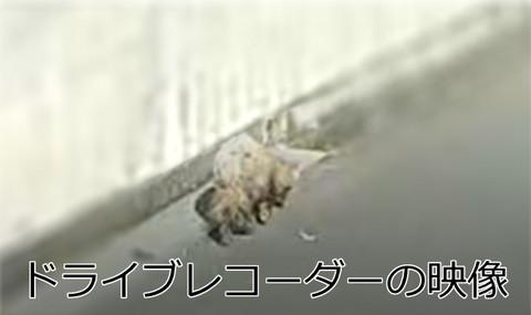キャプチャ1[1].jpg